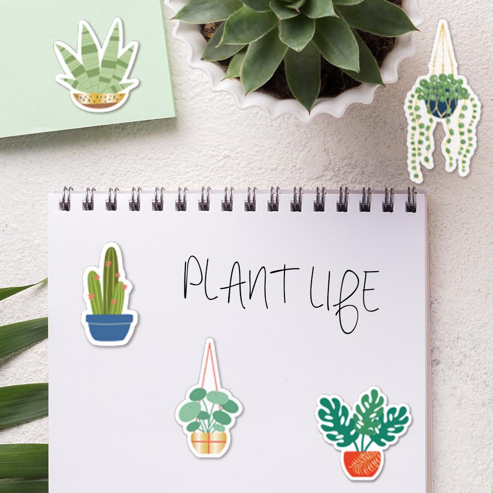 17799-plant-2